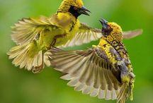 zvirata / ptaci