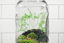 Inside planting idea's / by Judy Barrington