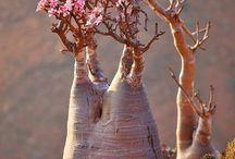 bomen en planten