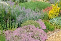 Jardín definitivo / Ideas para el jardín