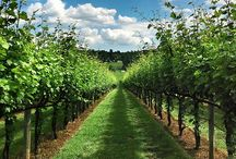 Favorite Virginia Wines and Wineries / Pin your favorite Virginia wines, wineries, winery photos! #wine #travel #virginia  / by VirginiaWine.org