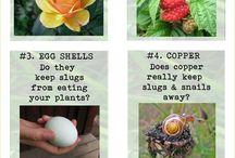 General Garden Tips