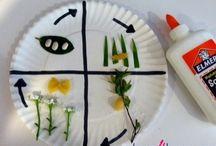 Caterpillar Lesson Plans