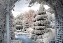 Jack the Frost / by Frannie Brandow