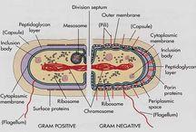 Microbiology / by Nicole McKenna
