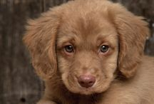 Puppy Fever! / by Sharayah Kenady