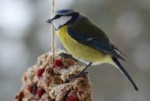 Birding Articles and Information