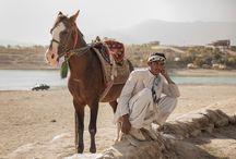 L'Afghan / Regroupant sept types de chevaux, très distinct, qui sont le Tooraq, le Samand, le Qazal, le Buzkashi, le Yargha, le Kohband et le Damand, l'Afghan est un cheval très prisé et sont prix peut atteindre des sommes considérées comme hautes dans son pays d'origine.