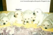 PuppyPablo!