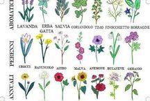 Apicoltura e giardinaggio