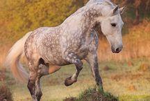 Horses <3 *-*