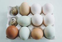 Second Term - Perfect Eggs / Second Term - Perfect Eggs