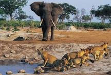 Elephants / by Susan Townsend