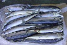 Mackerel Fish Frozen - Mackerel Frozen Factory