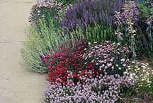 Garden Ideas I Love / by Kris Boydstun