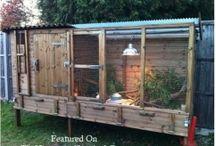 Quail / Ideas for quail house