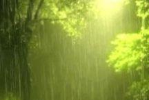 Rainy Days & Mondays / by Lynda Curry