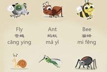 NH1 U7 Animals