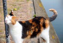 Cats / Adorable cats