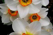 Blomme en rangskikkings