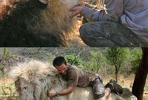l animal et l home une grande histoir d amour ❤❤