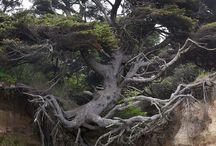 arbres / des arbres