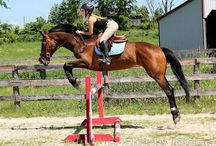 Horse For Sale / Horses available for sale
