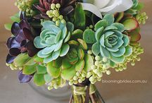 Eloquent Succulents  / Suculent theme / by Amber Woodall