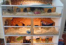 my guinea pig penthouse