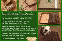 Pets stuffs