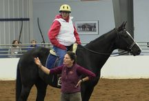 2013 CHA International Conference / Images from 2013 Certified Horsemanship Association International Conference in Hamburg, NY!