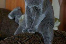 Cat portraits / gatti