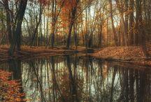 Couleurs d'automne / Une balade dans une forêt automnale aux mille et une couleurs et aux senteurs boisées épicées.