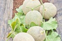 Veg/Fruit