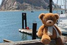 Travel Bear's Adventures