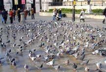 Burung-Burung di Negara Ini Takut dengan Makanan Bertuliskan Lafadz Allah