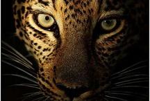 Animal Pics