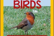 Songs for bird theme