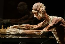 LA MORTE NELL'ARTE / Una ricerca nell'ambito della morte e tutti i suoi percorsi compiuti dagli artisti di varie epoche...