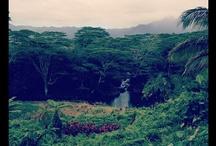 Kauai / by Mariam Daudi