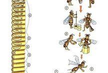 Abelhas, bees