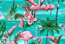 Flamingo resimleri