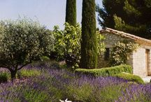 Provence and Southern European Gardens / Travelling in France/ Provence, in Southern Europe Gardening and landscaping