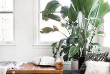 Palmstraat Planten