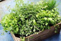 mat i hagen