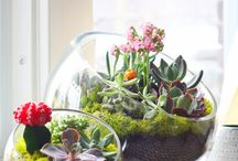 Terrariums / A selection of ideas & inspiration for growing plants in terrariums.