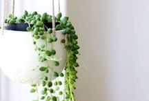 inneplanter