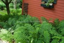 other garden ideas