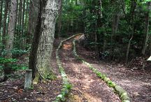 Nature Trail / by Kelley Nelson