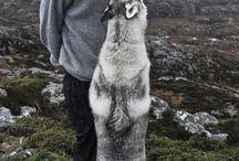 Zvířata a příroda